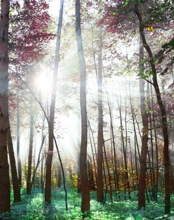 woodland scenery: Woodland in fabulous colors