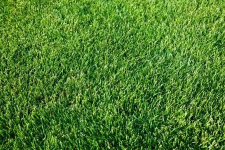geen: Close up shot of fresh spring geen grass.
