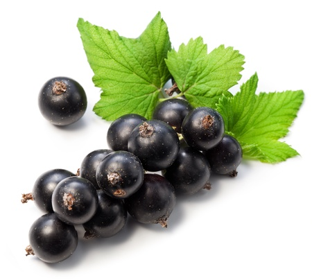 currant: Branch of black currant on a white background