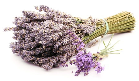 dried herb: Bunch of dried and fresh lavender on a white background. Stock Photo