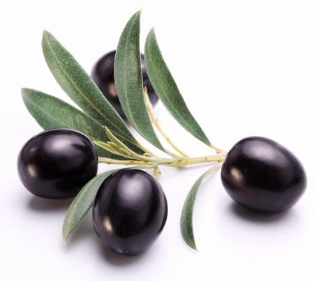 hoja de olivo: Aceitunas negras maduras con hojas sobre un fondo blanco.