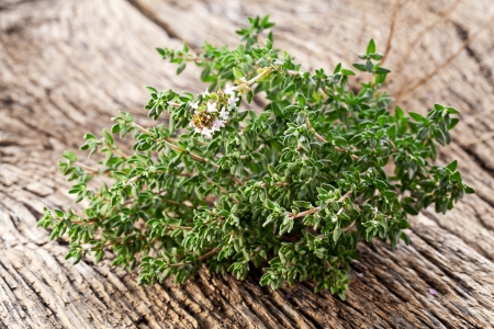 thyme: Thyme herb on wooden table