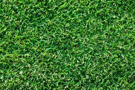 geen: Close up shot of fresh spring geen grass