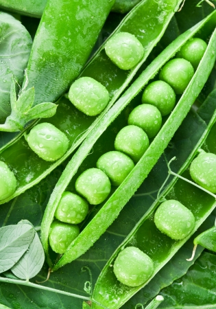 Pods of green peas on a background of leaves. Stock Photo - 17440788