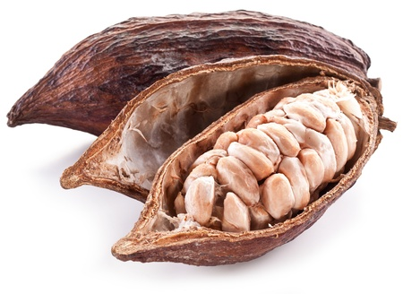 Open cocoa pod on a white background. photo