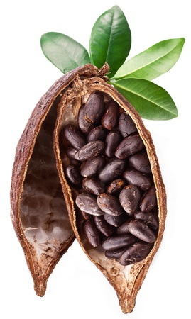 Cocoa pod on a white background. Stock Photo