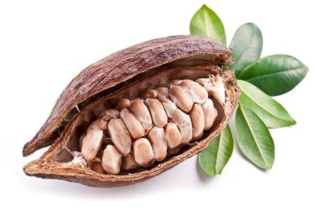 Cocoa pod on a white background. Foto de archivo