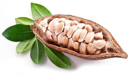 frijoles rojos: Cacao de la vaina en un fondo blanco. Foto de archivo