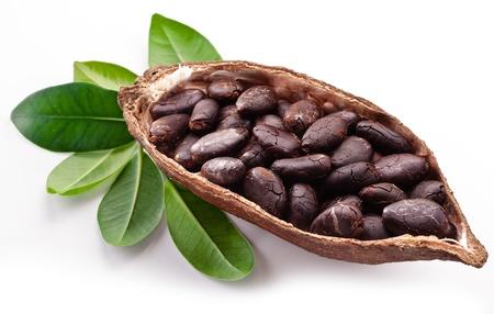 planta de frijol: Cacao en un fondo blanco.