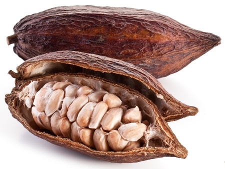 cocoa bean: Cocoa pod on a white background. Stock Photo