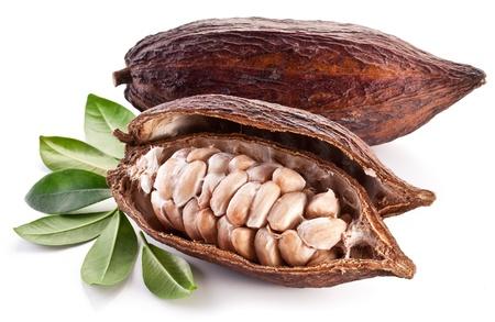 planta de frijol: Cacao de la vaina en un fondo blanco. Foto de archivo