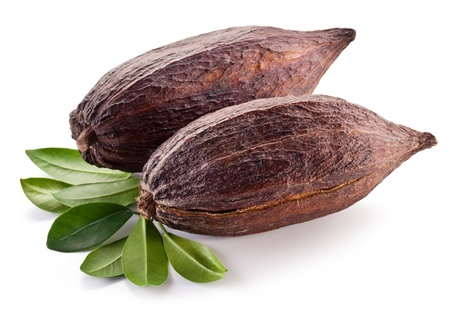 cacao: Cocoa pod on a white background. Stock Photo