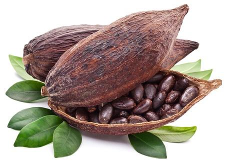 bean plant: Cocoa pod on a white background. Stock Photo