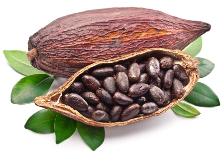 cacao: Cacao de la vaina en un fondo blanco. Foto de archivo