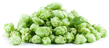 Inflorescence of hops on a white background. Stock Photo - 19841235