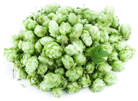 Inflorescence of hops on a white background. Stock Photo - 19841274