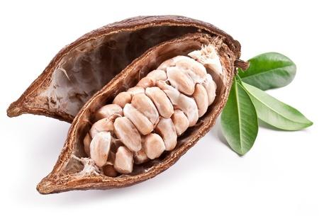 cocoa beans: Cocoa pod on a white background. Stock Photo