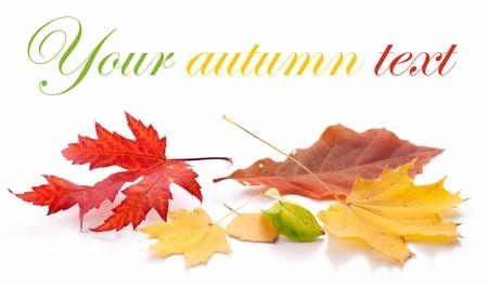 Herbstlaub auf einem weißen Hintergrund.