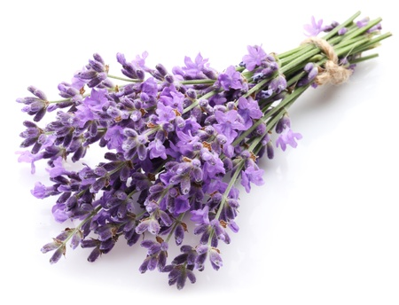 lavender flowers: Bunch of lavender on a white background.