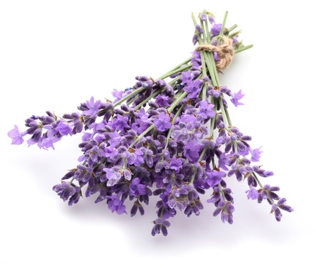 Bunch of lavender on a white background. photo