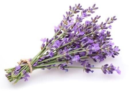 Bunch von Lavendel auf einem wei?en Hintergrund.