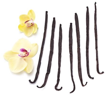 Palos de vainilla con una flor en un fondo blanco. Foto de archivo