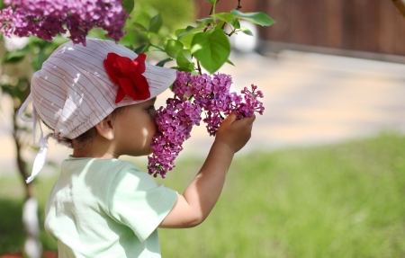 sniffing: Baby girl sniffing lilac.