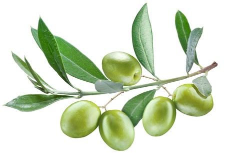 Branch of olive tree with green olives on it isolated on a white. Stock Photo