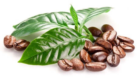 coffee coffee plant: Roasted coffee beans and leaves isolated on a white background. Stock Photo