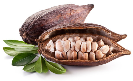 Cocoa pod on a white background. Archivio Fotografico