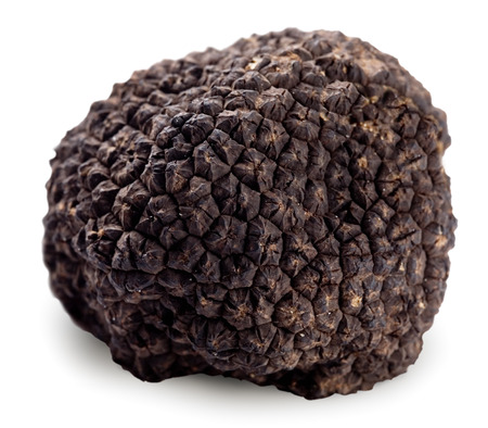 Black truffle on a white background. Clipping path.