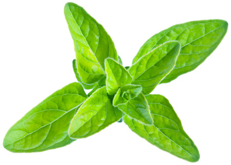 marjoram: Green fresh marjoram leaves on a white background. Clipping path. Stock Photo