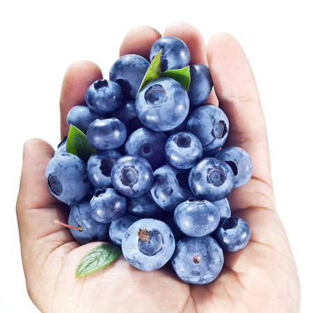 Blueberries in the mans hand over white. photo