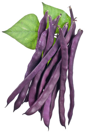 leguminous: Violet string beans isolated on a white background.