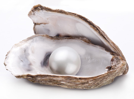oyster shell: Open oyster with pearl isolated on white background.