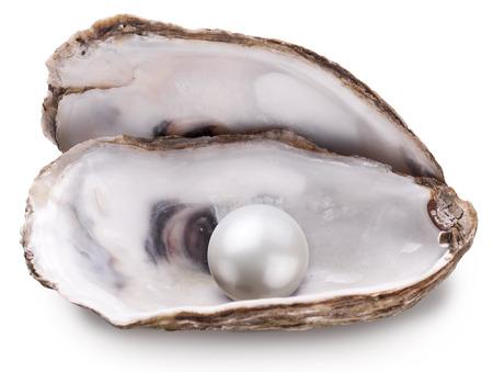 Öffnen Sie Auster mit Perle auf weißem Hintergrund. Standard-Bild
