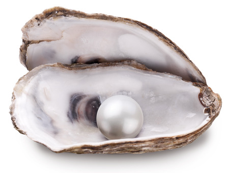 pearl shell: Open oyster with pearl isolated on white background.