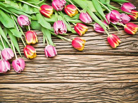 Pink and red tulips on a old wooden background. Space for text. photo