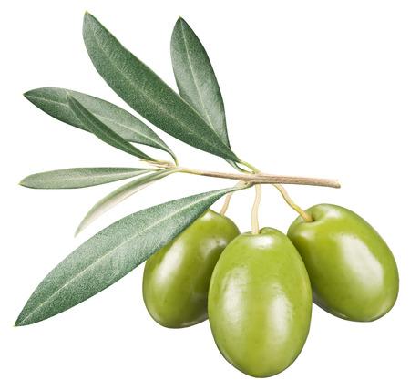 hoja de olivo: Aceitunas verdes con hojas sobre un fondo blanco