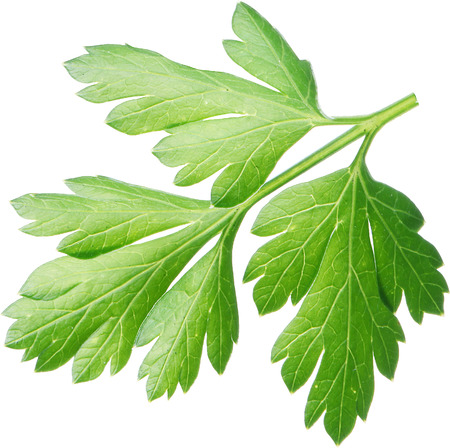 macros: Parsley herb. Macro shot. File contains clipping paths.