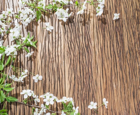 Twigs: Blooming cherry twig over old wooden table.
