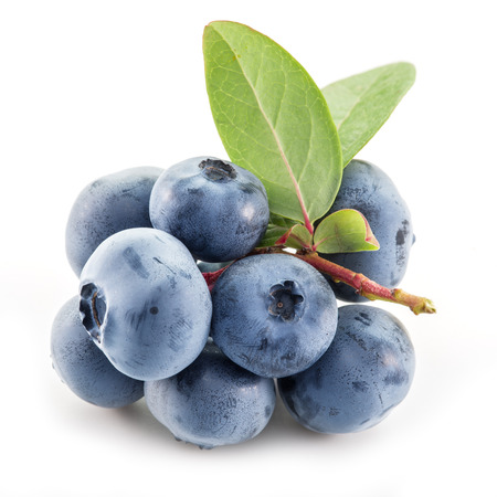 blueberries: Ripe blueberries on the white background.