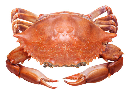 Cooked crab on a white background. File contains clipping paths.
