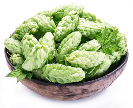 hop hops: Hop cones in the old wooden bowl. Isolated on the white background. Stock Photo