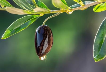 huile: Bol en bois rempli d'olives et des brindilles d'oliviers ailleurs il.