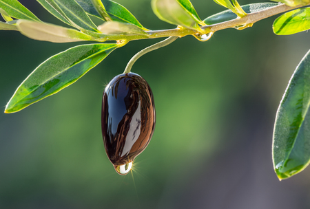 Cuenco de madera llena de aceitunas y ramas de olivo, además de él. Foto de archivo - 46222476