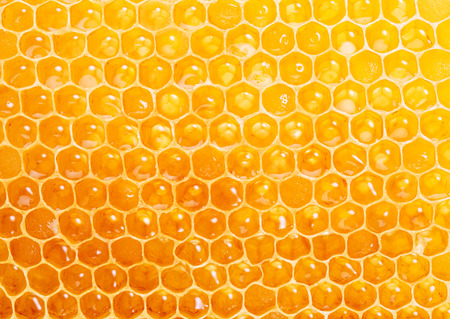 Honeycomb.  High-quality picture.  Macro shot. Stock Photo