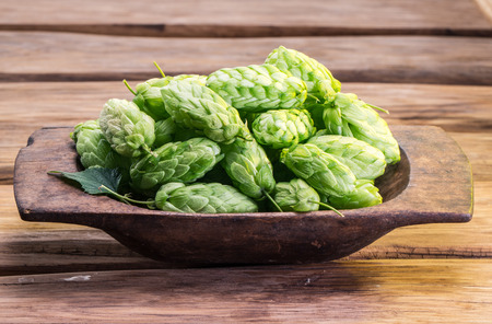 hop plant: Hop cones in the wooden tray on the wooden table.