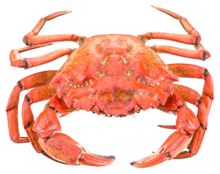 clipping: Cooked crab. File contains clipping paths. Stock Photo