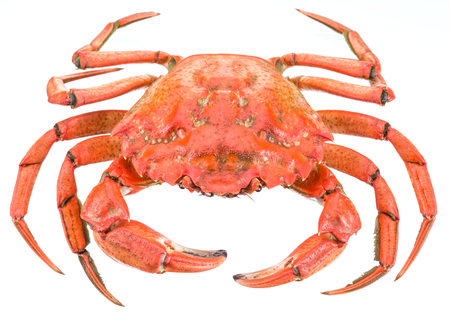 exoskeleton: Cooked crab. File contains clipping paths. Stock Photo